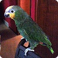 Adopt A Pet :: Paulie - Lenexa, KS