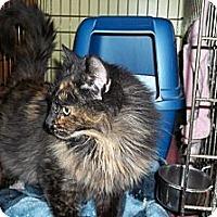 Adopt A Pet :: Emmie - Acme, PA