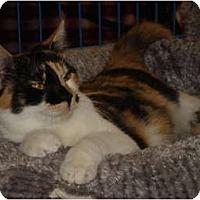 Adopt A Pet :: Jingle - Chesapeake, VA
