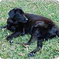 Adopt A Pet :: Buck - Altmonte Springs, FL