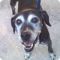 Adopt A Pet :: Thor - Orange Lake, FL