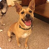 Adopt A Pet :: Abbie - Rochester/Buffalo, NY