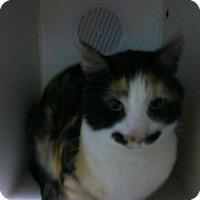 Adopt A Pet :: FeeBee - Hamilton, ON