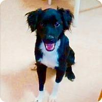 Adopt A Pet :: Jackson - Freeport, ME