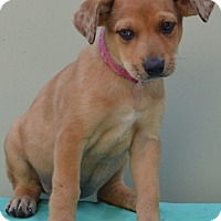 Adopt A Pet :: Carli - Pleasant Plain, OH