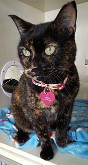 Domestic Shorthair Cat for adoption in detroit, Michigan - Springtime