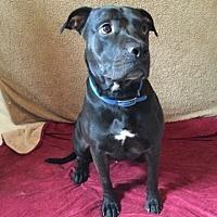 Adopt A Pet :: Henry - Centerburg, OH