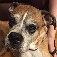 Adopt A Pet :: Tarken - Central & West Florida, FL
