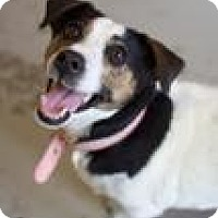 Adopt A Pet :: Cecille - Canyon Country, CA