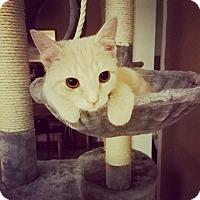 Adopt A Pet :: Maria - Columbus, OH