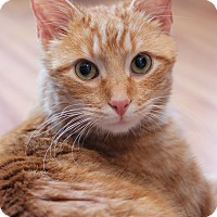 Adopt A Pet :: Rory - Carlisle, PA