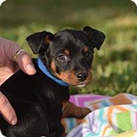Adopt A Pet :: Cooper - Rosamond, CA