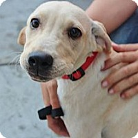 Adopt A Pet :: Tucker - Somers, CT