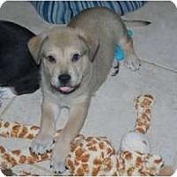 Adopt A Pet :: Bruiser - Minneola, FL