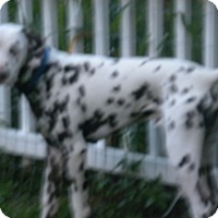 Adopt A Pet :: Frankie - Middletown, PA