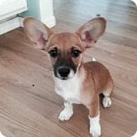 Adopt A Pet :: COURTNEY - Atascadero, CA
