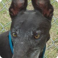 Adopt A Pet :: Backwood Amos - Longwood, FL