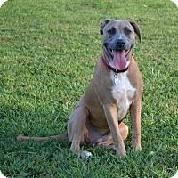 Adopt A Pet :: Jillian - Homewood, AL
