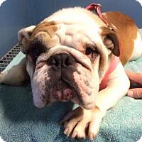 Adopt A Pet :: Faith - Kansas city, MO