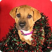 Adopt A Pet :: SLEEPY - Carrollton, TX