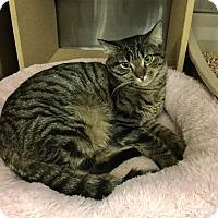 Adopt A Pet :: Tetley - Colmar, PA