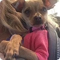 Adopt A Pet :: NutMeg - San Marcos, CA