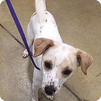 Adopt A Pet :: Evan - Gainesville, FL