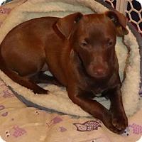 Adopt A Pet :: Riley Marie - San Diego, CA