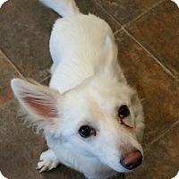 Adopt A Pet :: Casper - Lisbon, OH