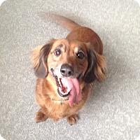 Adopt A Pet :: Charlie - Pompton Lakes, NJ