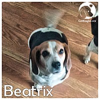 Adopt A Pet :: Beatrix - Chicago, IL