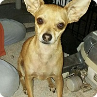 Adopt A Pet :: Cooper - Sanford, FL