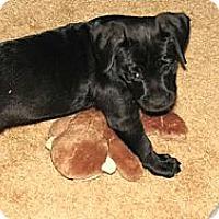 Adopt A Pet :: Ema sweetest pup - Sacramento, CA