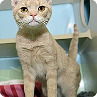 Adopt A Pet :: Tabitha - New York, NY