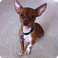 Adopt A Pet :: Paco - Commerce City, CO