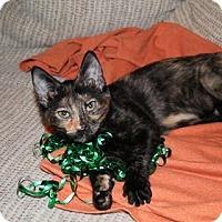 Adopt A Pet :: Zilla - Clearfield, UT