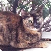 Adopt A Pet :: Bonnie - brewerton, NY
