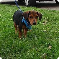 Adopt A Pet :: Ronan - Baton Rouge, LA