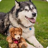 Adopt A Pet :: MOLLY - Seattle, WA