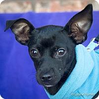 Adopt A Pet :: Quinn - San Marcos, CA