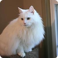 Adopt A Pet :: Liana - Cary, NC