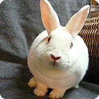 Adopt A Pet :: Bubbles - Newport, DE