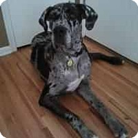 Adopt A Pet :: Gibbson - Inver Grove Heights, MN