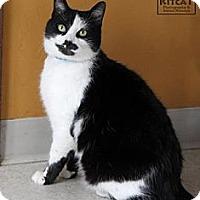 Adopt A Pet :: Cindy - Lancaster, MA