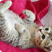 Adopt A Pet :: Robyn - Xenia, OH