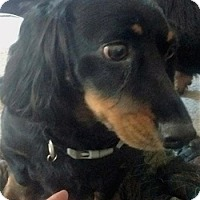 Adopt A Pet :: Spencer - Georgetown, KY