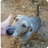 Adopt A Pet :: Cali - Von Ormy, TX