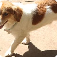 Adopt A Pet :: Everett - Bedminster, NJ