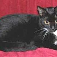 Adopt A Pet :: Tuxianna - Miami, FL