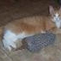 Adopt A Pet :: Amos - Stuart, VA